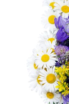 Free Bouquet Of Wild Camomiles Royalty Free Stock Photography - 21260087