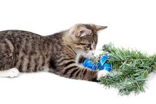 Free Kitten And Christmas Royalty Free Stock Image - 21260436