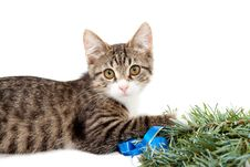 Free Kitten And Christmas Royalty Free Stock Photography - 21260447
