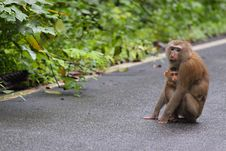 Free Little Monkey Hug On Mom Stock Photography - 21262712