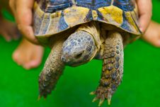 Free The Child And Turtle Stock Images - 21262834