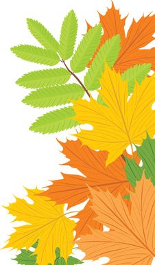 Free Maple And Ash Leaves Royalty Free Stock Images - 21262909