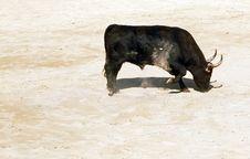 Angry Bull Shoving Sand Stock Photo