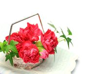 Free Carnation And Ivy Royalty Free Stock Images - 21263359