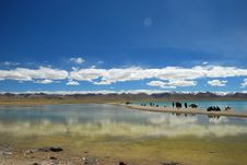 Free By The Namtso Lake Stock Image - 21263551
