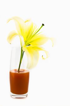 Free Lily Flower Isolated On White Royalty Free Stock Photography - 21265557