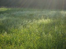 Sunshine Meadow Royalty Free Stock Images