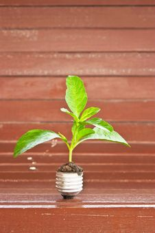 Free Green Tree Stock Images - 21266964