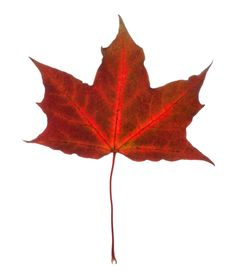 Free Beautiful Fall Leaf Stock Photos - 21267223
