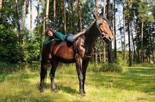 Free Girl On Horseback Stock Photo - 21267240
