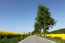 Free Rural Road Yellow Rape Canola Field And Tree Royalty Free Stock Images - 21268169
