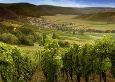 Free German Vineyards Stock Photos - 21268203