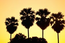 Free Palm Trees In Sunset Royalty Free Stock Photo - 21268205