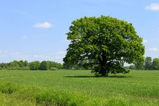 Green Field Tree And Blue Sky Stock Photos