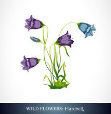 Free Harebell Stock Photography - 21268662