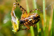 Free A Hunting Spider Stock Image - 21268811