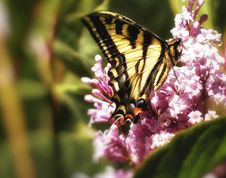 Free Eating Butterfly Royalty Free Stock Image - 21269366