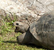 Free Turtle Yawning Stock Photography - 21269592