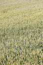Free Seed Field Royalty Free Stock Photo - 21273205