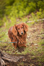 Free Dog In Nature Stock Photography - 21273432