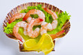 Free Shrimp Salad Royalty Free Stock Photos - 21274138