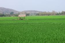 Free Small Hut And Rice Field Royalty Free Stock Photos - 21270748