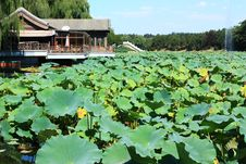 Free Lotus And Pavilion Stock Photography - 21270812