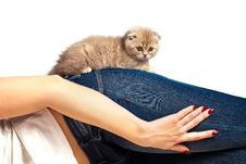Fluffy Kitten On A Woman S Thigh Stock Photos