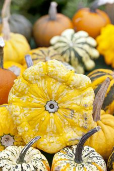 Free Assorted Pumpkins Royalty Free Stock Photography - 21272307