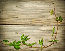Free One Vine Branch On Wooden Background Royalty Free Stock Photos - 21272338