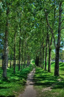 Forest Walking Path, HDR Stock Image