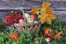 Free Apples And  Yellow Leaves Royalty Free Stock Images - 21274549
