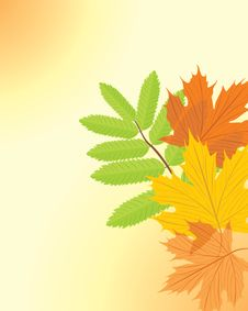 Free Autumn Maple And Ash Leaves Stock Photo - 21278040