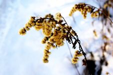 Free Plant In Winter Royalty Free Stock Images - 21278239