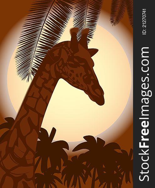 Giraffe and a night landscape
