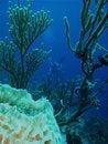 Free Diver On The Horizon Stock Photo - 21281020