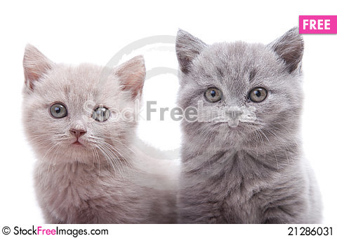 Free Two British Kittens Stock Image - 21286031