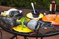 Free Pigeons Stock Image - 21281251