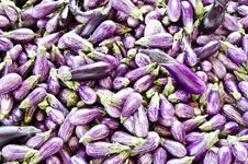 Free Small Eggplants Stock Photography - 21282572