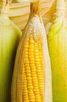 Free Image Of Corns Stock Image - 21284051
