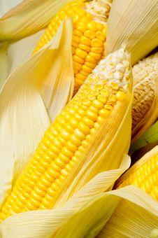 Free Image Of Corns Royalty Free Stock Image - 21284086