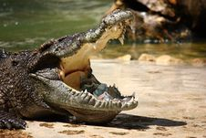 Free Crocodile With Money In Mouth Royalty Free Stock Photos - 21285068