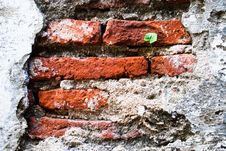 Free Plant On The Brick Wall Royalty Free Stock Images - 21285659