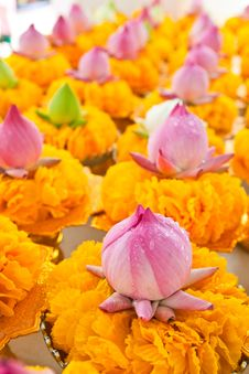 Free Row Of Lotus And Yellow Flower Garlands On Tray Royalty Free Stock Photo - 21285705