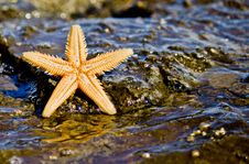 Free Starfish On The Rock In The Sea Water Stock Image - 21286271