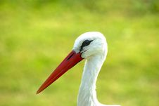 Free Stork Royalty Free Stock Photos - 21288428