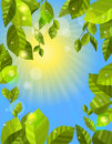Free Frame With Green Leaves Stock Images - 21295424