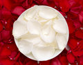 Free White And Red Rose Petals Stock Photography - 21295572