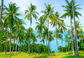 Free Beautiful Beach With Palm Tree Over The Sand Stock Photos - 21296233