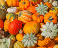 Free Colorful Pumpkins Royalty Free Stock Photography - 21298107